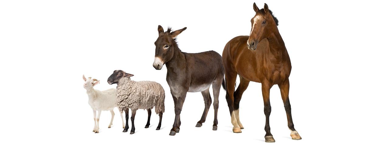 Seminare zu Tiergesundheit